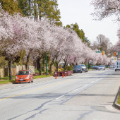 Vancouver: conheça os lugares mais badalados da cidade