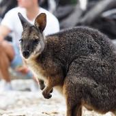 ¿Por qué estudiar en el sur de Australia?
